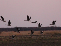 По факту массовой гибели редких животных с птицами завели уголовное дело