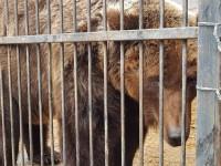 Из васильевского реабилитационного центра забрали спасённую медведицу