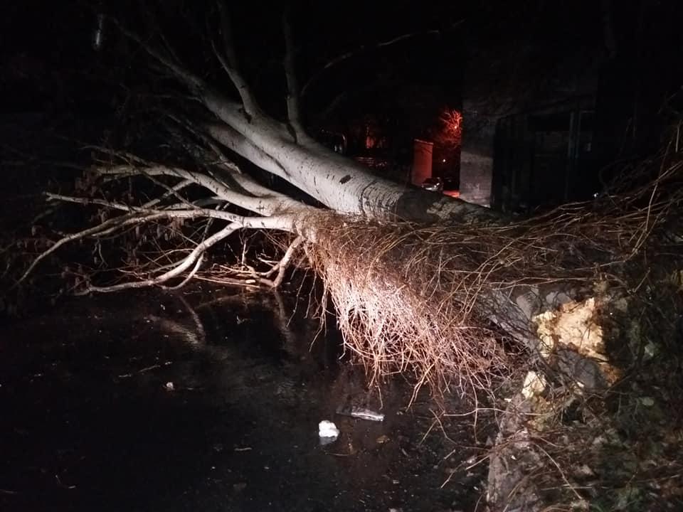 В Запорожье ураганный ветер валил деревья, билборды и металлоконструкцию с крыши завода (Фото, Видео)