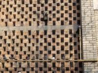 Жители многоэтажки в Запорожской области заживо замуровали птиц из-за шума