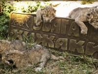 В зоопарке для хищников под Запорожьем подорожал входной билет