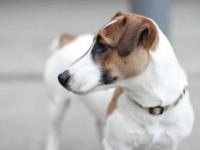 В Запорожской области посадили в тюрьму живодера, зарезавшего собаку