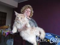 Домашнего кота из Мелитополя готовят для Книги рекордов Гиннесса