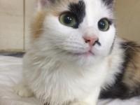 Запорожские волонтеры нашли семью для бездомной кошки в США (Фото)