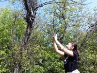 В Запорожье огромные полозы спариваются на деревьях (Фото)