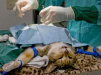 В Запорожье за бюджетные деньги простерилизовали почти 1000 бездомных животных – сколько потратили