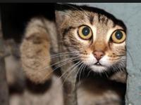 В Запорожье уличным котам разрешили жить в подвалах и ловить мышей