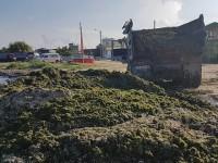 На берегу запорожского курорта собрали горы водорослей – вывозить нечем