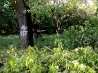 В центре Запорожья незаконно пилят деревья, прикрываясь мэрией (Видео)