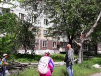 На Бородинском дерево упало на женщину с ребенком