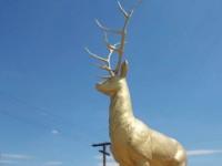 Каждый год одно и то же: оленю на въезде в Кирилловку отломали «антивандальные» рога