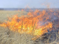В Мелитополе из-за сухой травы чуть не сгорела деревянная гостиница