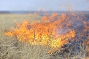 В Запорожье выгорело 15 гектаров пшеницы