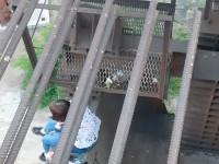 17-летнюю запорожанку несколько часов уговаривали не прыгать с моста
