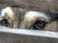 Оставили на свободе: запорожский суд вынес приговор женщине, выбросившей собаку с 7 этажа