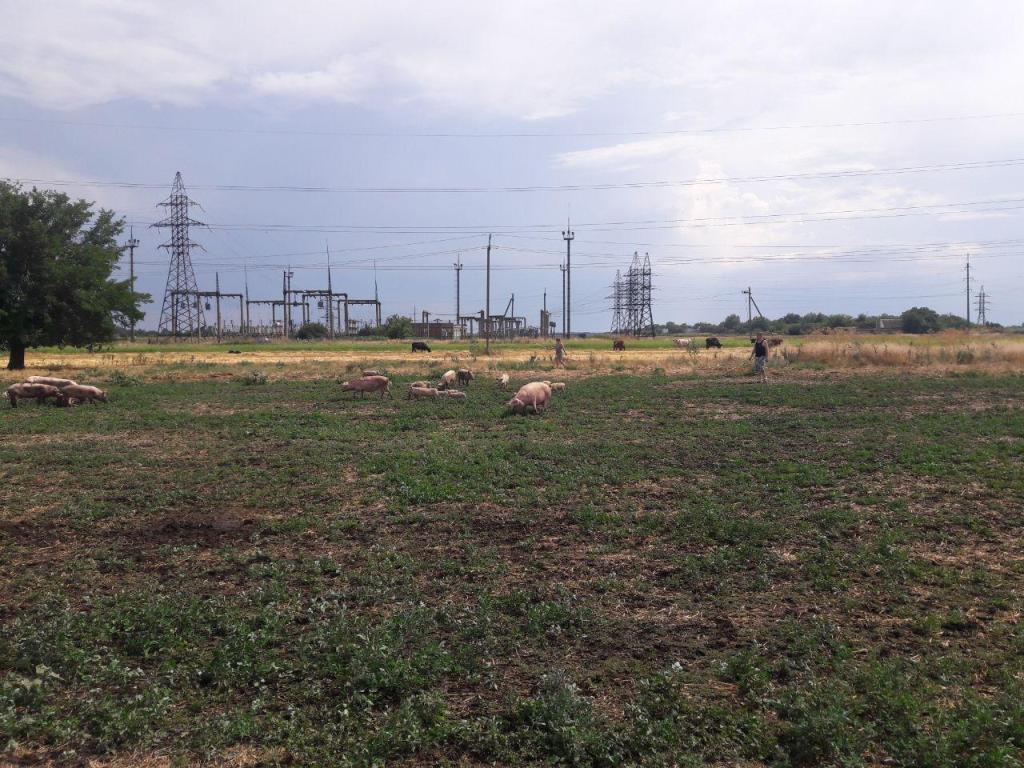 Под Запорожьем из-за молнии загорелась ферма – свиней успели эвакуировать