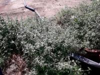 В Кирилловке базы отдыха годами выливают нечистоты в лиман – никого не наказали