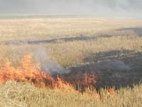 Жители Приморска выйдут на акцию протеста против фермеров, которые жгут поля