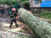 Спилили 40 деревьев, вытянули 27 авто: спасатели отчитались о ликвидации последствий непогоды