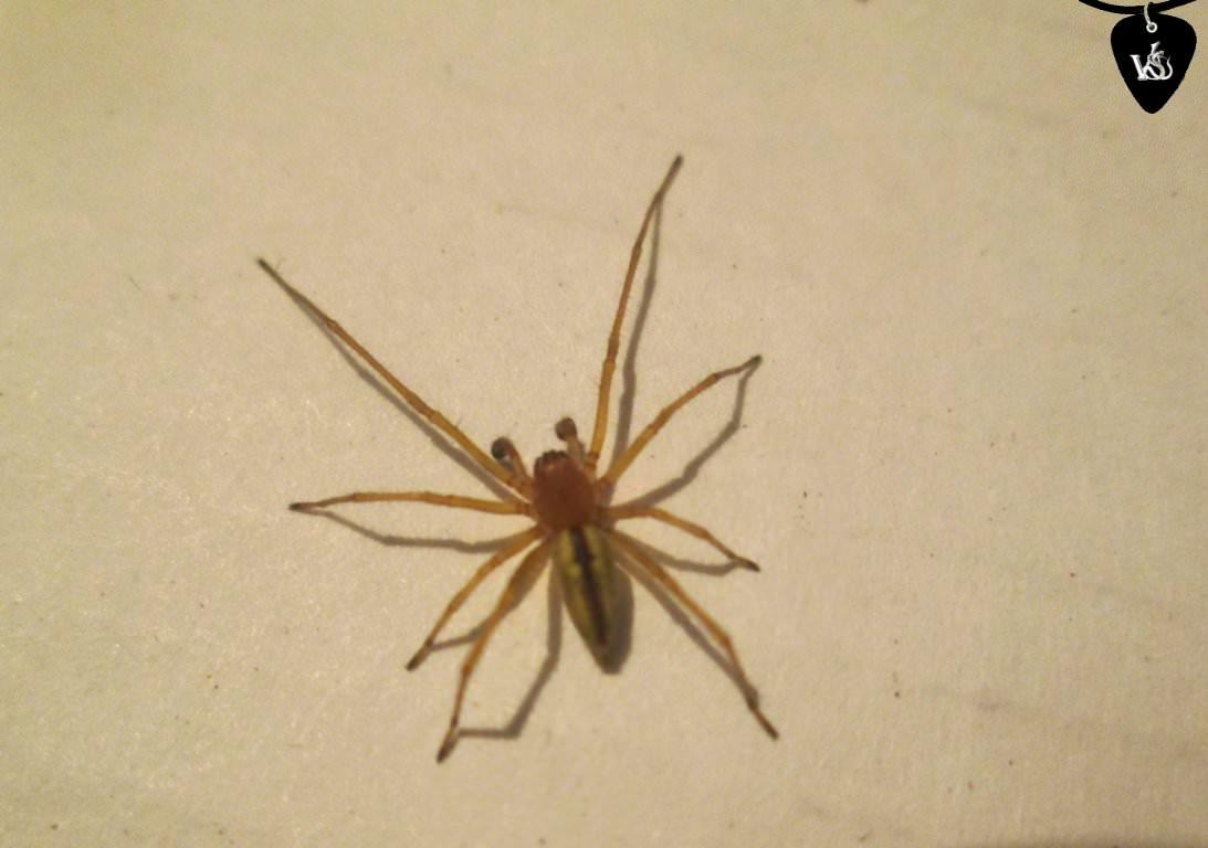 За неделю двое жителей Запорожской области пострадали от укусов паука