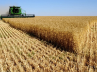 В 9 районах Запорожской области град повредил урожай