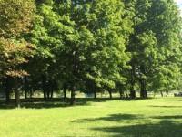 В Запорожье готовятся принять программу по озеленению города на 10 лет: что это значит