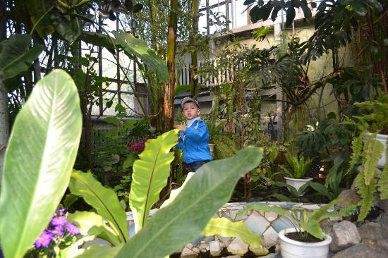 В ботаническом саду Запорожья построят оранжерею с бассейном