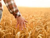 Молодые запорожские фермеры могут получить 40 тыс. гривен субсидии – кто еще