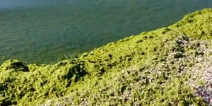 Азовское море на запорожском курорте превратилось в болото