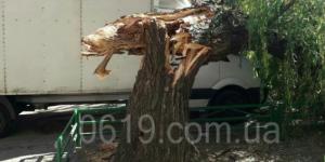 """Надломившееся дерево повредило """"ГАЗель"""""""