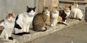 В Запорожье предлагают признать котов частью экосистемы