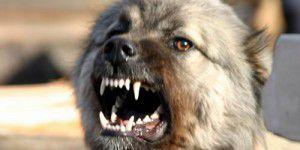 В запорожском селе дворовая собака покусала ребенка