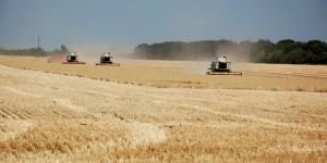 Запорожские аграрии в сложных условиях собрали рекордный урожай за все время независимости