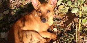 Запорожская семья выгнала собаку на улицу, потому что не дали субсидию