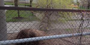 В Запорожской области дерево рухнуло на территории детсада