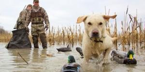 В Запорожской области запретили охоту из-за опасности пожаров