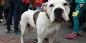 """""""Скажем за тех, кто сам не может"""": в Запорожье состоялся марш за права животных"""