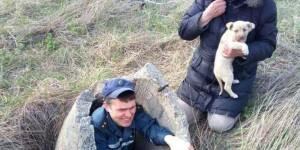 В Бердянске за сутки спасли щенка и собаку, провалившихся в колодец
