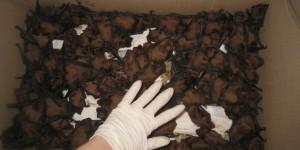 На Хортице выпустят 400 краснокнижных животных