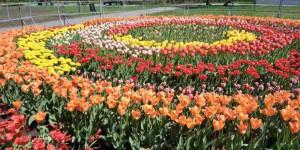 Осталось дождаться тепла: коммунальщики обещают украсить запорожские парки новыми клумбами