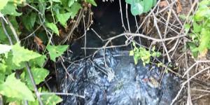 В Кирилловке в очередной раз зафиксировали слив нечистот в лиман