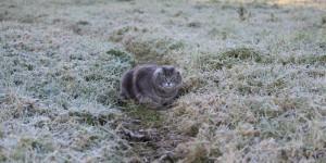 В Запорожской области объявлено штормовое предупреждение: ожидаются заморозки
